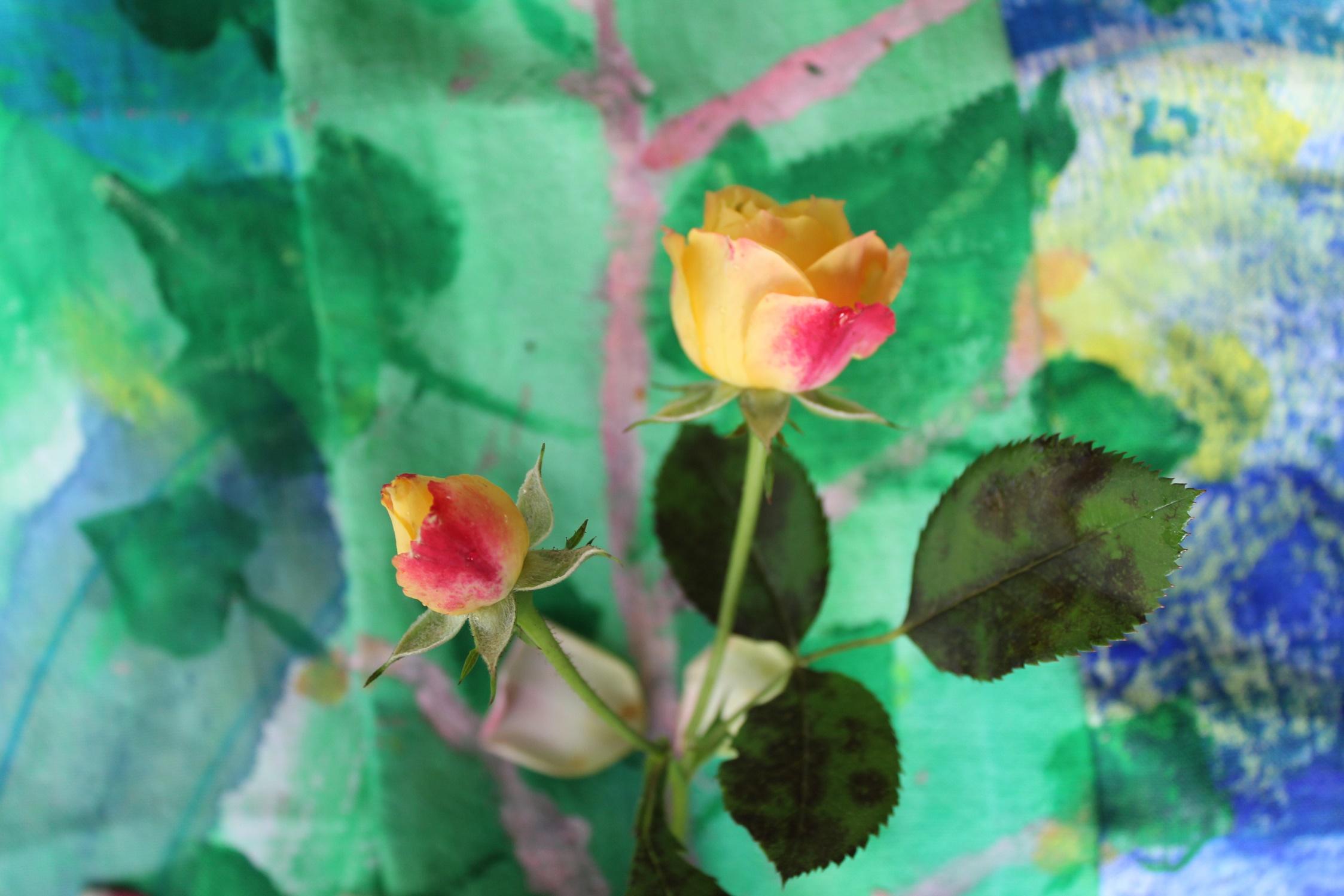Die Rosen blühen immer noch